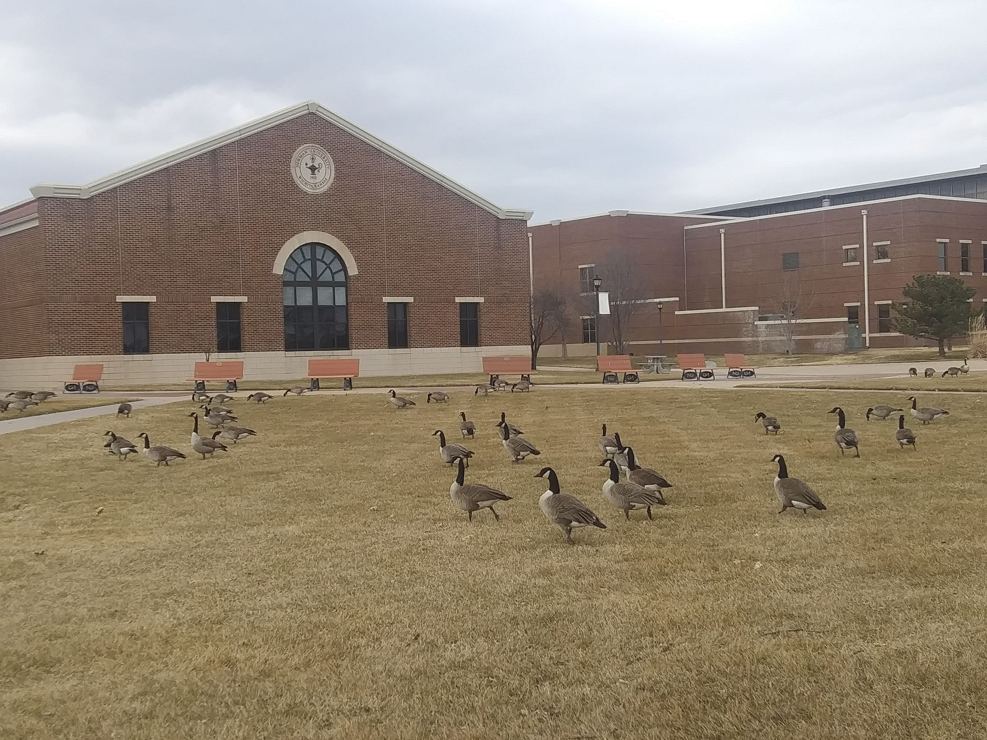 Geese's presence wanted despite unwanted presents