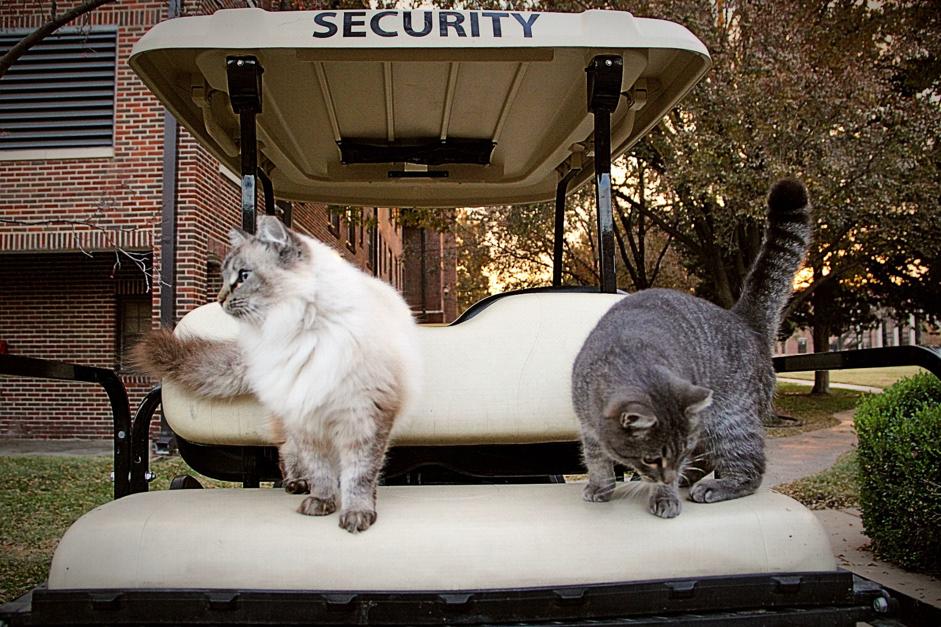 Response to Ty-Rade: Our campus cats are a part of Newman